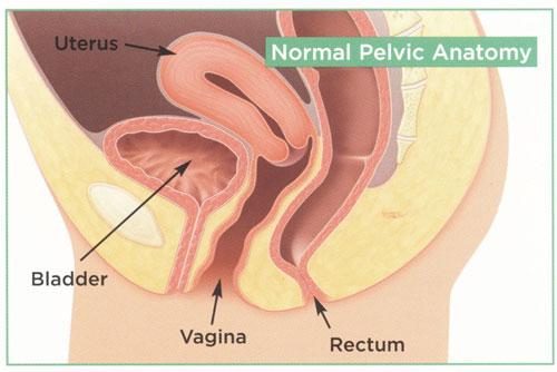 vagina-devstvennitsi-krupnoe-foto